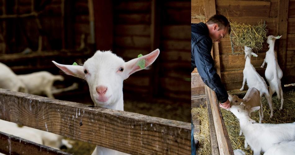 T geertje farm zoeterwoude the netherlands urban - Amar atelier ...