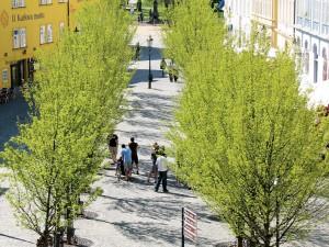 Straatbomen en bomenlanen