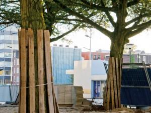 Het beschermen van groen, bomen en grond tijdens bouwactiviteiten