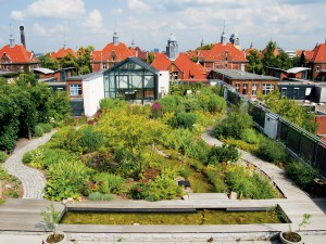 Intensieve groene daken