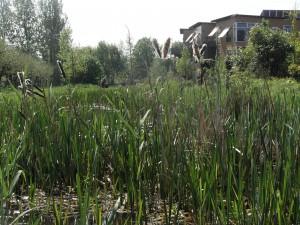 Grondwateraanvulling of actief grondwaterpeilbeheer