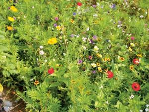 Grasvelden en bloemenweiden