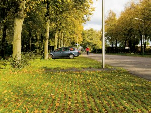 Voorzie parkeerplaatsen van bomen