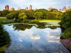 Groengebieden aanleggen, behouden, verbeteren en oppervlakken ontharden