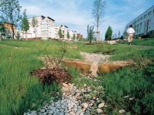 Nature-friendly bioswales