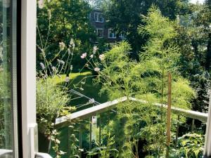 Balkontuinen