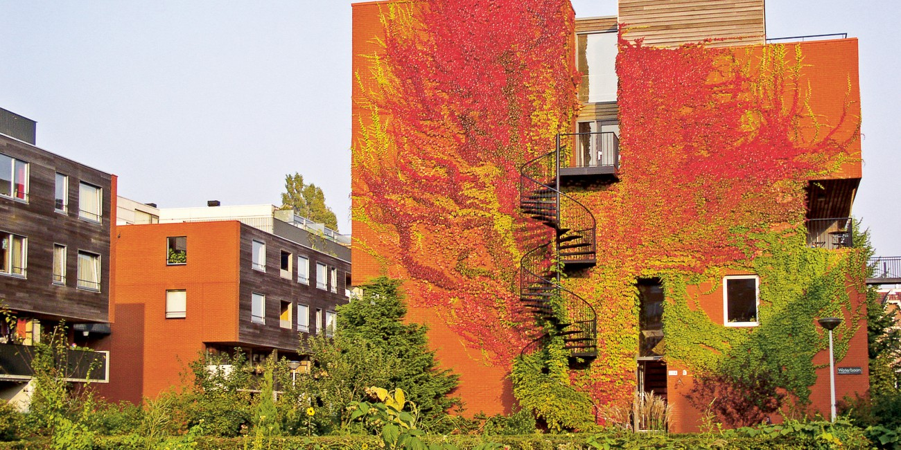 Green facades | Urban green-blue grids