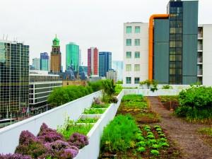 Roof fields, Schieblok Rotterdam