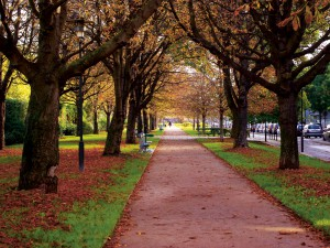 Tree-lined avenues