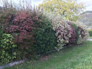 Hedge biotopes / natural hedges