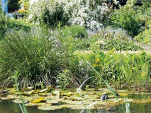 Rainwater ponds for buffering and purification of moderately polluted water