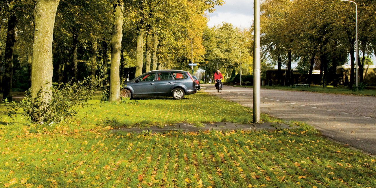 Plant Trees In Car Parks Urban Green Blue Grids
