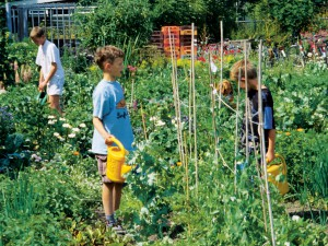 Children's garden plots